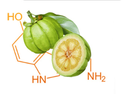 garcinia cambogia Direct south africa