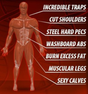 Ripped-Muscle-XL