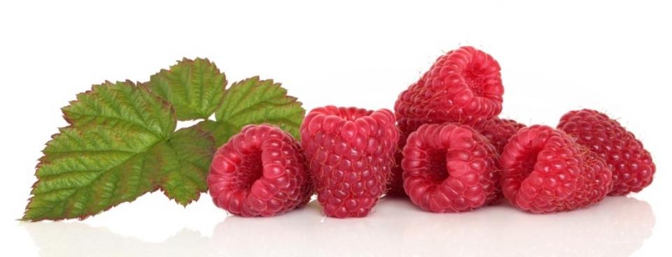 raspberry-ketone1