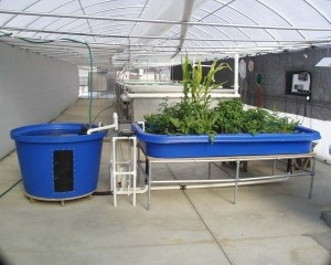Aquaponics-4-You-Review-Post-300x240