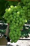 The-Complete-Grape-Growing-System2