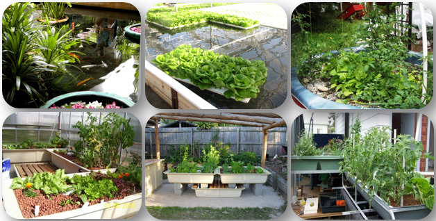 aquaponics-ebook-free-download