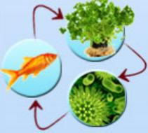 hydroponics-and-aquaculture
