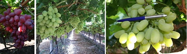 the complete grape growing system reviews