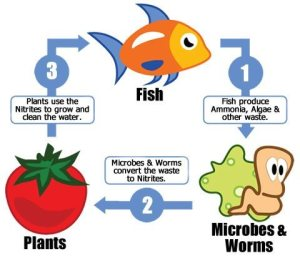 what-is-aquaponics