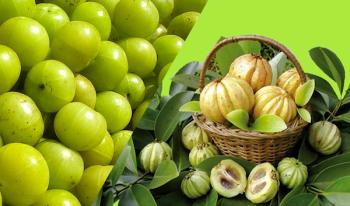 Garcinia Essentials Ingredients