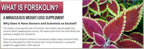 Coleus Forshilii