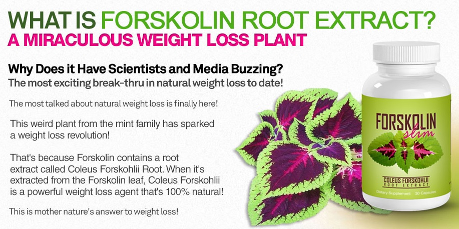 Forskolin Slim Ingredients